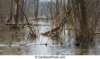 Riparian stand flooded in springtime - Bialowieza forest...