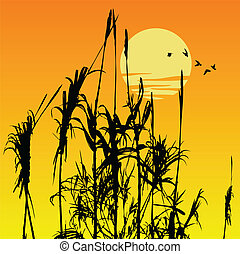 reeds - vector silhouette of some reeds