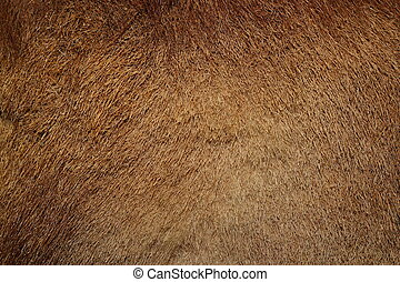 wild boar pelt - closeup of wild boar textured pelt