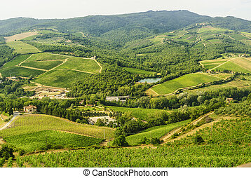 Chianti landscape near Radda, with vineyards and olive trees