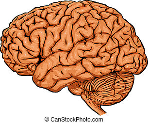 Brain - 2D computer illustration of isolated human brain