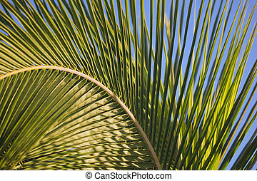 Arched Palm Frond - Large palm frond bending in the wind...