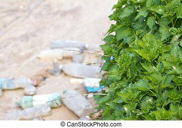 nettles near a dirty river