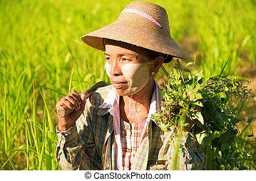 traditionelle, asiatisch, weibliche, landwirt