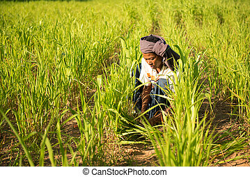 Traditional Asian male farmer working