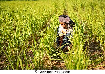 traditionelle, Mann, asiatisch, arbeitende, landwirt