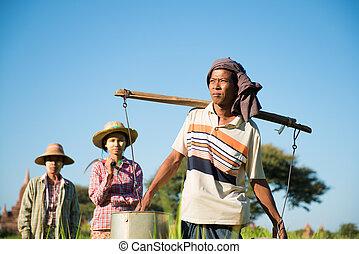 grupo, tradicional, asiático, granjeros
