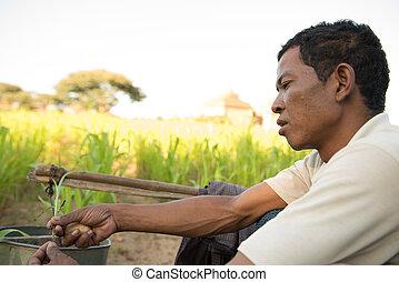 traditionelle, Porträt, Mann, asiatisch, landwirt