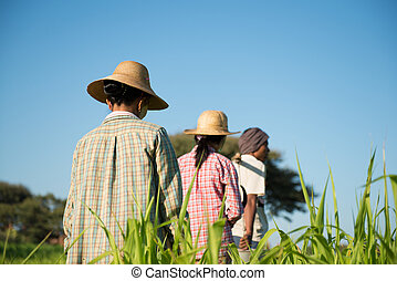 Rear view Group of Traditional Asian farmers