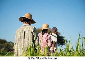 Gruppe, Landwirte, traditionelle, asiatisch, Rückseite, Ansicht
