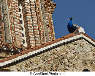 Peacock on monastery - Part of monastery Saint Naum Ohrid,...