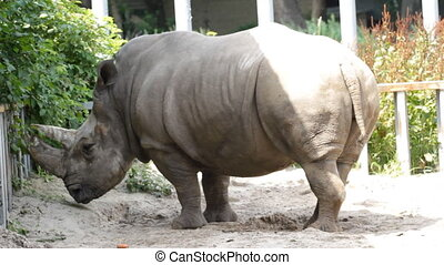 Portrait Rhinoceros - Portrait of a Rhinoceros