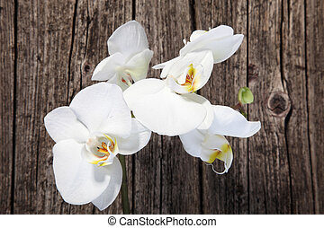 White phalaenopsis orchids - Overhead view of a spray of...