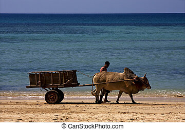 dustman lagoon worker animal - hand cart people dustman...