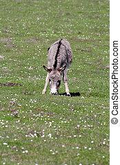 donkey on pasture farm scene