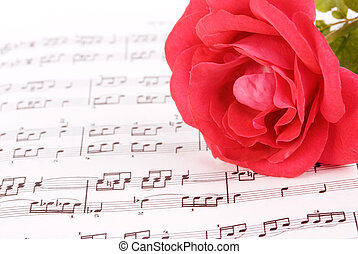 music - pink rose with classic notes