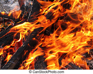 burning wood in fire - Close-up of bright and hot fire