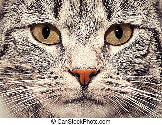 Cat face close up portrait - Cute cat face close up portrait...