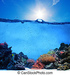 Underwater scene. Coral reef, blue sunny sky and clean water...