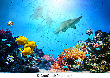 Underwater scene. Coral reef, fish groups, sharks in clear...