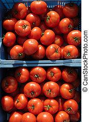 番茄, 蔬菜