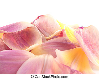 Isolated pink tulip petals on white background