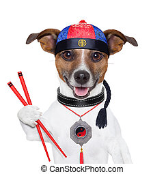 asian dog with chopsticks and asian hat