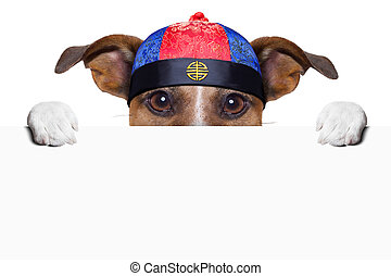 asian dog with chopsticks and asian hat behind banner