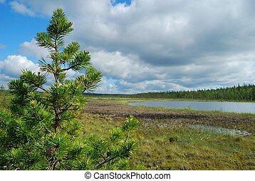 Pine and bog - Boggy landscape