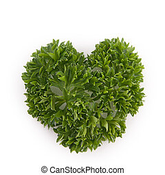 isolated parsley leaf