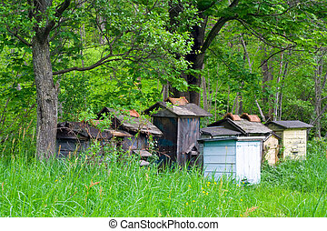 apiary in forest
