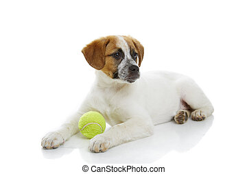 Dog with ball toy