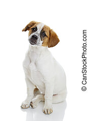 Obedient sitting dog