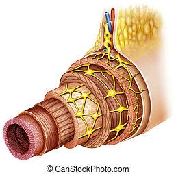 biology birth cell development dna - Schematic illustration...