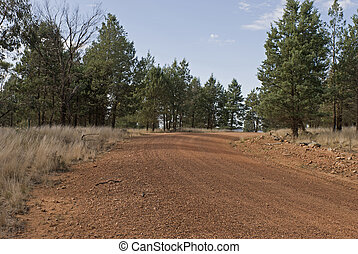 transport - a dirt road bends through forest of trees