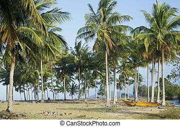 Coconut plantation in southern Thailand
