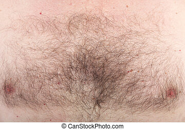 Mans hairy chest with nipples - Closeup background detail of...