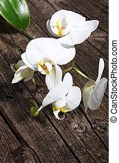Spray of white phalaenopsis orchids - Spray of fresh white...