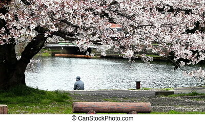 Nice sakura background for adv or others purpose use