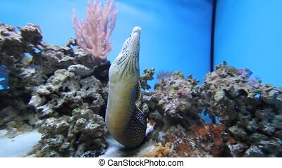 Aquarium Fish - Close-up shot of aquarium fish
