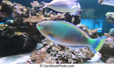Aquarium Fish - Close-up shot of aquarium fish
