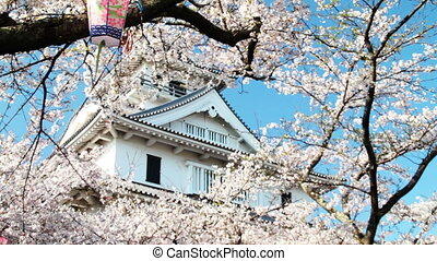 nice sakura with old castle for adv or others purpose use