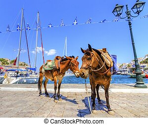 Donkeys on Greek island - Two donkeys at the Greek island,...