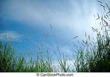 grass in sun light and sky on background
