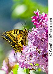 Pretty swallowtail butterfly