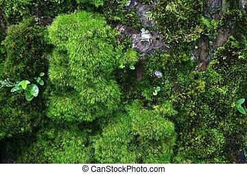 Green wet moss