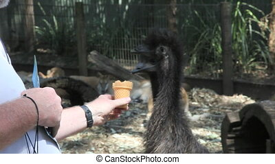 Emu picking - An emu is picking on an ice waffle of a zoo...