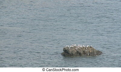 Seagulls on Rock - Seagulls on Isolated rock island near the...
