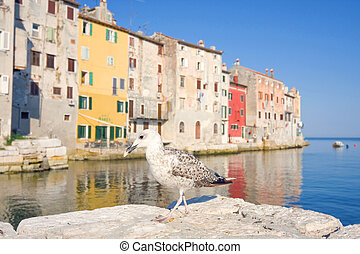 seagull on a background of old buildings, Rovinj, Croatia
