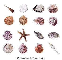 Assorted Seashells Isolated on White